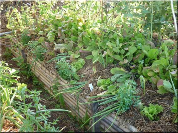Les diff rentes techniques de culture pour un potager en for Permaculture petit jardin